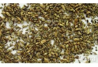槐米多少钱一斤?槐米价格行情