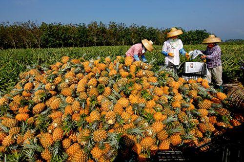 <b>海南:构建现代农业经营体系 做大做强农垦产业</b>