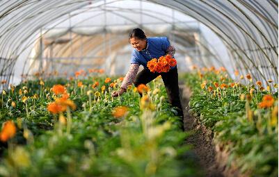 河南汤阴县:家庭农场借助电商平台增收