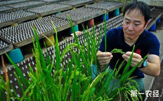 水稻基因研究