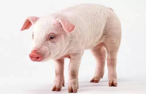 <b>2017年生猪补贴力度又发生什么样变化?</b>