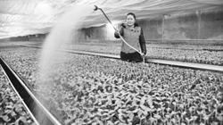 安徽砀山:做强西瓜产业 远销东南亚
