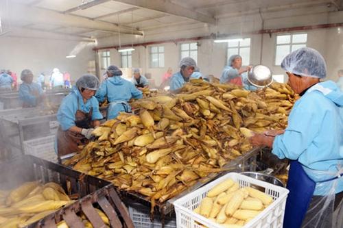 <b>关于进一步促进农产品加工业发展意见(全文)</b>