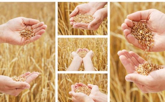 购买种子时如何通过标签快速辨别假冒伪劣种子?