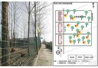 土鸡养殖场如何规划?1000只养鸡场设计图,养鸡场地规划图