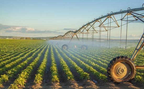 2017年农业产业结构调整重点在种业改革