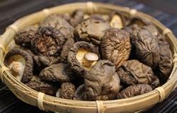 东北香菇精品压缩块  黑龙江鹤岗知名土特产