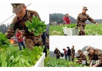 贵州杏山街道小堡村蔬菜滞销 热心民兵帮贫困户采摘蔬菜