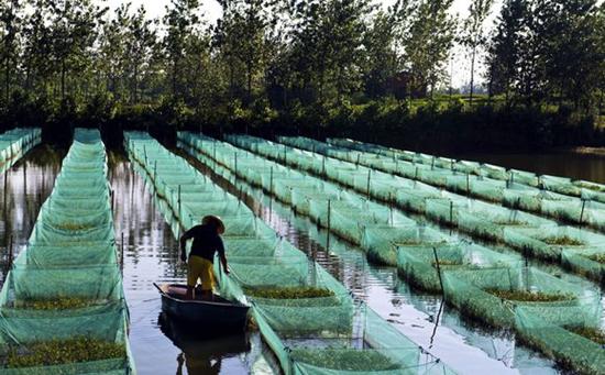 一亩黄鳝养殖利润有多少?2017年黄鳝养殖利润和成本计算