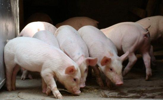 2017年生猪补贴的力度变化 动物防疫补贴及相应补偿