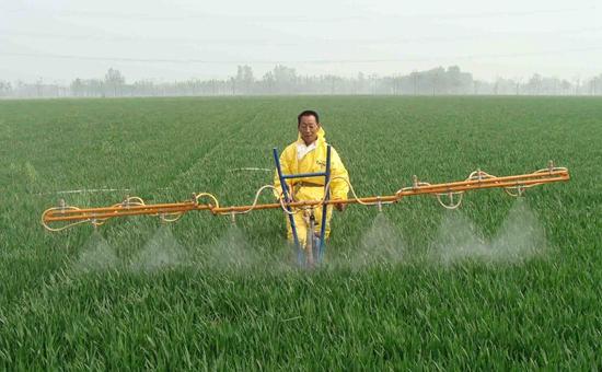 湖北省发布关于加强当前小麦条锈病防控工作的通知