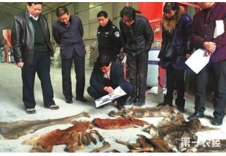 <b>购买食用野生动物违法!陕西查获13只被宰杀国家保护动物</b>