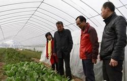 """太湖""""领头雁""""建立合作社助力农民脱贫致富"""