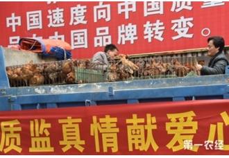 广西瑶族自治县贫困户土鸡滞销 市质监局解燃眉之急