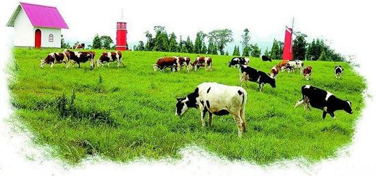 宁夏:奶牛规模化养殖率已达到95.3%