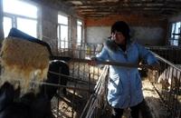 吕景秀:新年带动全村养猪致富
