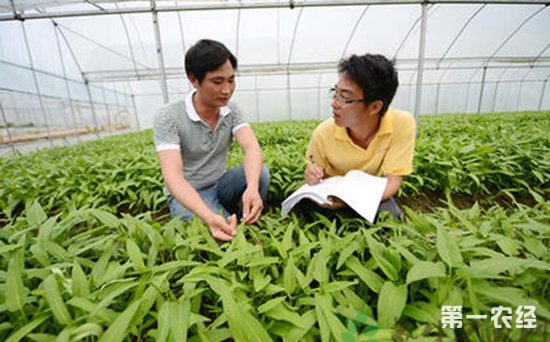 新型职业农民
