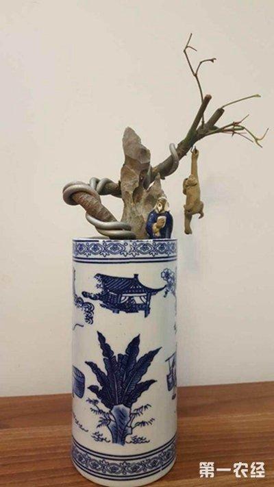 空酒瓶种盆栽图片欣赏