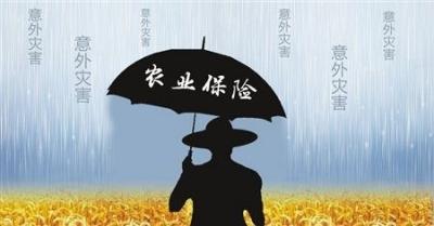 """中央财政完善农业保险费补贴制度 引入了""""无赔款优待"""""""