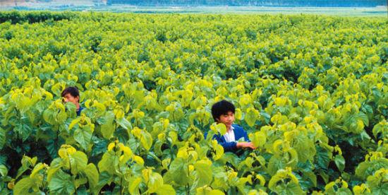 """陕西:推进农业供给侧结构性改革 把握好""""五个关键"""""""