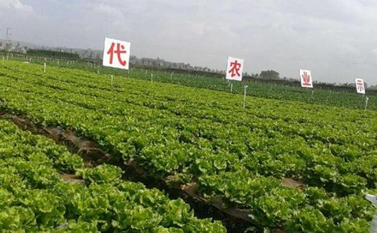 <b>云南:加快发展高原特色现代农业</b>