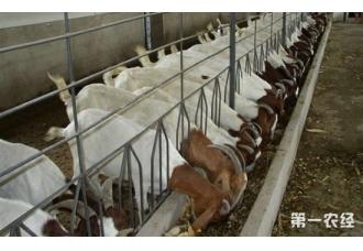 如何养羊?发酵床养羊技术