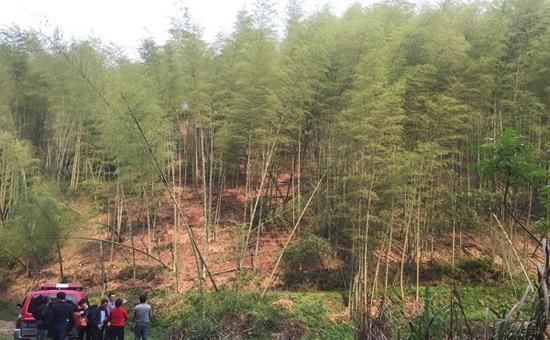 甘肃:家庭办林场 可自己做主可工商注册