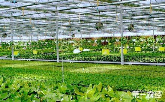 """天津:""""互联网 农业""""让现代农业展开信息化双翼 - 科技"""