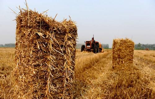 黑龙江:推进农业供给侧结构性改革 明确三大主粮增值方向