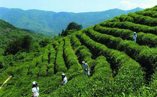 辽宁:实施农村环境综合整治工程 促绿色发展