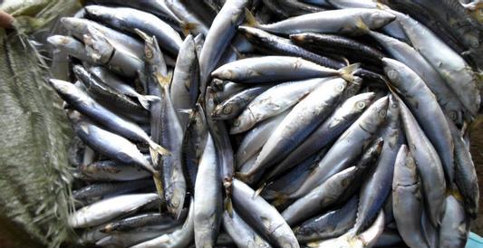 缅甸出口美国水产品检查出含有沙门氏菌被拒