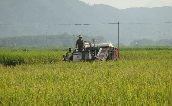泰国:多季稻种植面积增致价跌 望出口