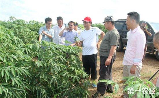 柬埔寨—中国木薯橡胶良种繁育及高效栽培技术示范基地