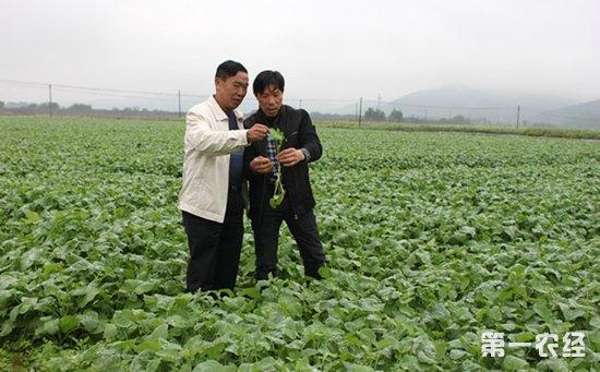 农业科技下乡
