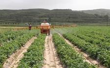 山东肥城700多台农机参与马铃薯耕种作业