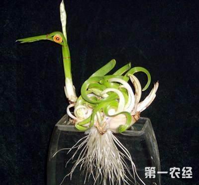 如何雕刻水仙花?水仙花雕刻方法图解