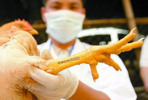 江西:报告h7n9禽流感病例28例 死亡7人