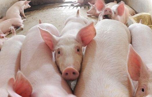 """2017年国家生猪养殖补贴政策 """"十三五""""生猪生产规划"""