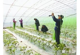 """黑龙江肇州年产瓜果蔬菜多""""农闲""""变成""""农忙"""""""