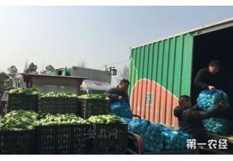 安徽合肥大圩青菜滞销 全城爱心接力解困局