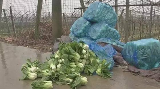 30万斤蔬菜1毛1斤没人要 菜农无奈发出滞销求助
