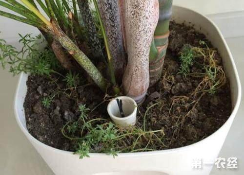 矿泉水瓶废物利用给兰花盆栽装上透气管图片