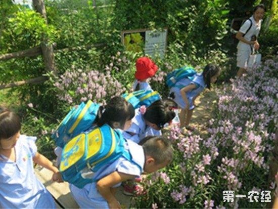 一花网推花卉新品,造园艺农园