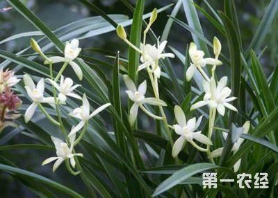 什么花放在卧室不好?6种不适宜摆在卧室的花卉