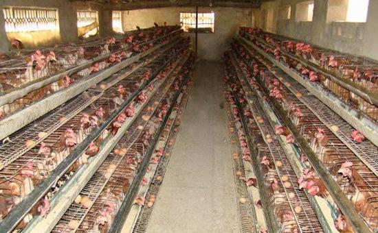 贵州:10家企业入选2016年畜禽养殖标准化示范场