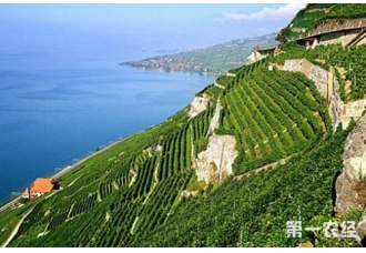 罗讷河谷((Rhone Valley)——法国最大红酒产区