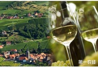 法国葡萄酒十大产区(图片)