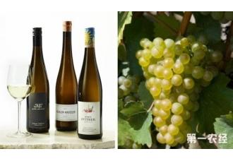 奥地利酿制葡萄酒的品种(图片)