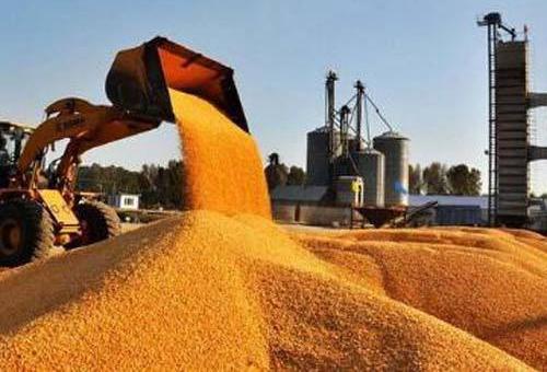 黑龙江:玉米深加工能力由180亿斤增加到220亿斤