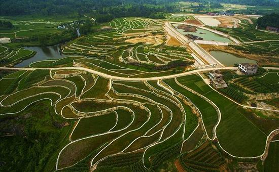 """宁夏中卫:发展特色产业,打造现代农业生产力""""高地"""""""